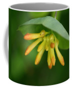 Umbrella Plant Coffee Mug