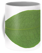 Underside Of A Coca Leaf, Erythroxylon Coffee Mug