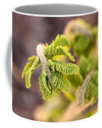 Unfolding Fern Leaf Coffee Mug