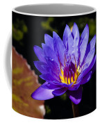 Upbeat Violet Elegance - The Beauty Of Waterlilies  Coffee Mug