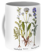Valerian Flowers, 1613 Coffee Mug