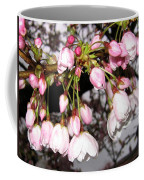 Vancouver Cherry Blossoms Coffee Mug