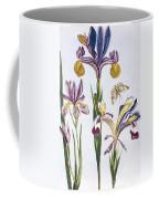 Variegated Iris Coffee Mug