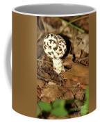 Varigated Mushroom Coffee Mug