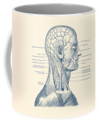 Vascular And Muscular System - Vintage Anatomy Print Coffee Mug