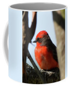 Vermilion Flycatcher Coffee Mug