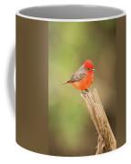 Vermilion Flycatcher Facing Camera On Tree Stump Coffee Mug