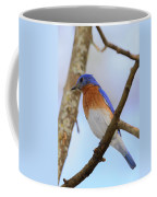 Very Bright Young Eastern Bluebird Perched On A Branch Colorful Coffee Mug