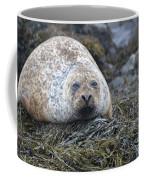 Very Chubby Harbor Seal Coffee Mug