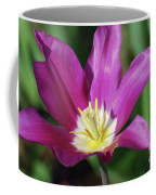 Very Pretty Dark Pink Blooming Tulip With Yellow In The Center Coffee Mug