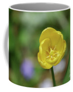 Very Pretty Flowering Yellow Tulip Blooming In A Garden Coffee Mug