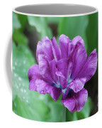 Very Pretty Purple Tulip With Dew Drops On The Petals Coffee Mug