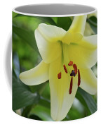Very Pretty Single Blooming Yellow Daylily Flower Coffee Mug
