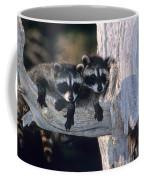 Very Young Raccoons Coffee Mug