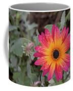 Vibrant African Daisy Coffee Mug