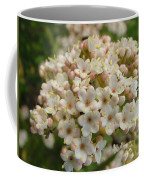 Haw Coffee Mug