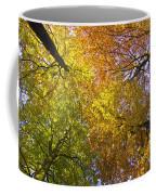 View To The Top Of Beech Trees Coffee Mug