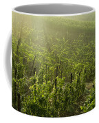 Vineyards Shrouded In Fog Coffee Mug