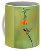 Violet-tailed Sylph Hummingbird Coffee Mug