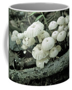 Wagon Wheel Mushroom Colony Coffee Mug