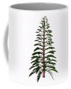 Walchia Tree Coffee Mug