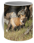 Wary Red Fox Coffee Mug