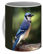Watchful Blue Jay Coffee Mug