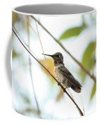 Watchful Hummingbird Coffee Mug