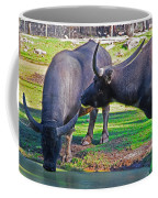 Watching 2 Water Buffalos 1 Water Buffalo Watching Me Coffee Mug
