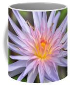 Water Lily  20 Coffee Mug