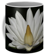 Water Lily 23 Coffee Mug
