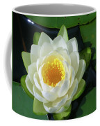 Water Lily 3437 Coffee Mug
