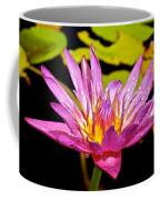 Water Lily After Rain 2 Coffee Mug