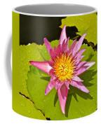 Water Lily After Rain 3 Coffee Mug