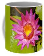 Water Lily After Rain 4 Coffee Mug