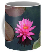 Water Lily - Afternoon Delight Coffee Mug