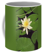 Water Lily I V Coffee Mug