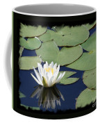 Water Lily With Black Border Coffee Mug