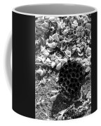 Water Lotus And Shells In Bw Coffee Mug