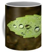 Water Strider Has A Drink At The Floating Leaf Cafe Coffee Mug