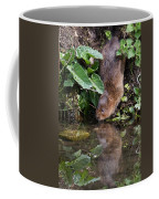 Water Vole Coffee Mug