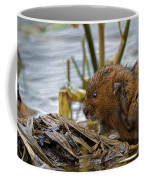 Water Vole Cleaning Coffee Mug