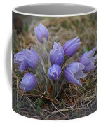 Watercolor Pasque Flowers Coffee Mug