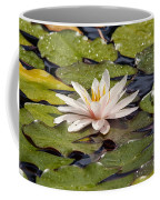 Waterlily On The Water Coffee Mug