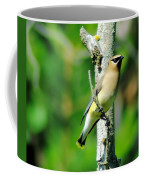 Wax Wing In A Small Branch  Coffee Mug