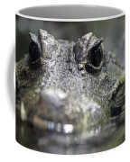 West African Dwarf Crocodile - Captive 03 Coffee Mug