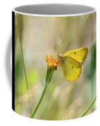 Wester Sulfur Butterfly Coffee Mug