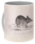 Western Barred Bandicoot. Perameles Bougainville Coffee Mug