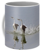 Western Grebe On Lake Coffee Mug