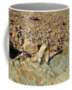Whistle Pig Of The Rockies Coffee Mug